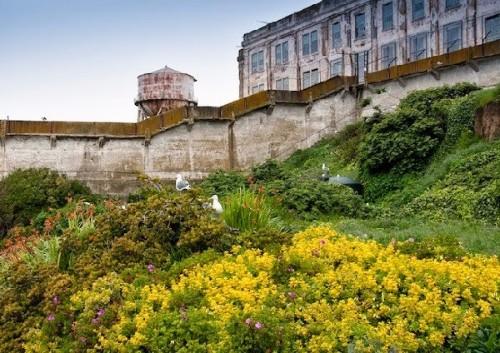 alcatraz41.jpg