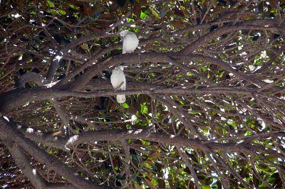 palomas_árbol_opt10.jpg